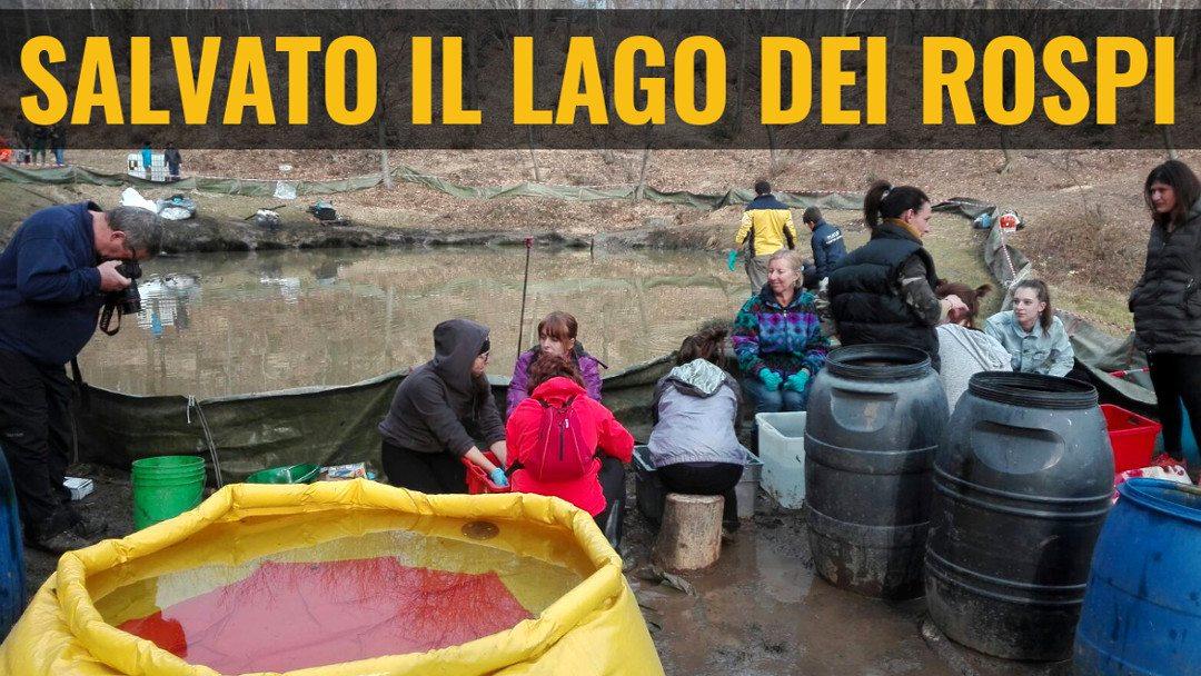 Notizie che danno speranza: il lago dei rospi salvato da decine di volontari