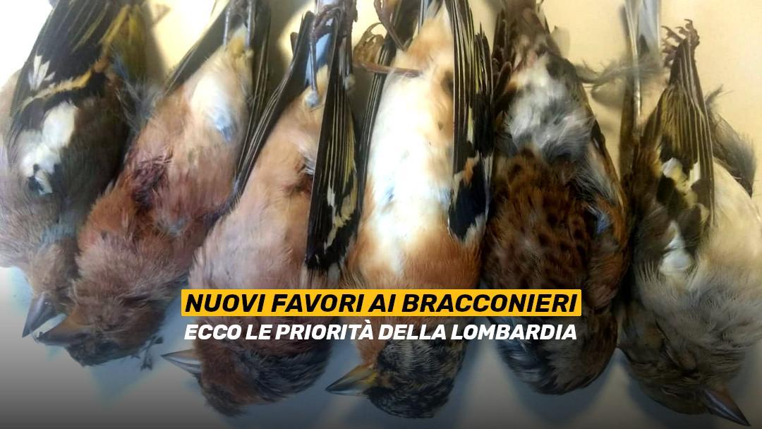 Ancora favori ai bracconieri: ecco le priorità della Lombardia